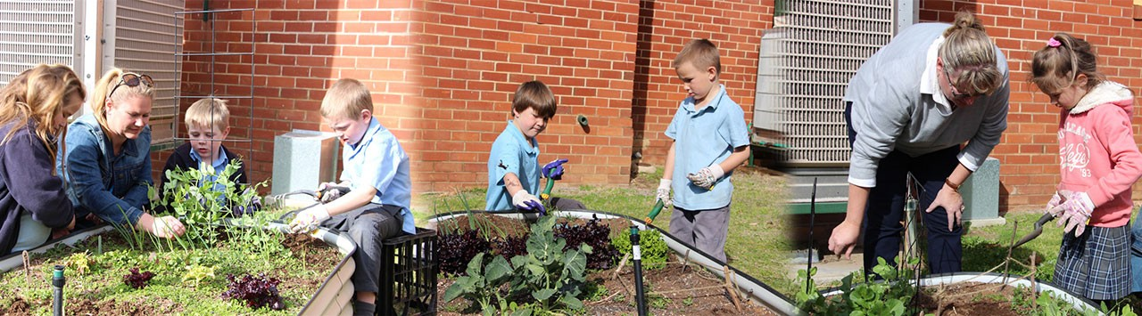 Students in Year 1 gardening in the vegie patch.